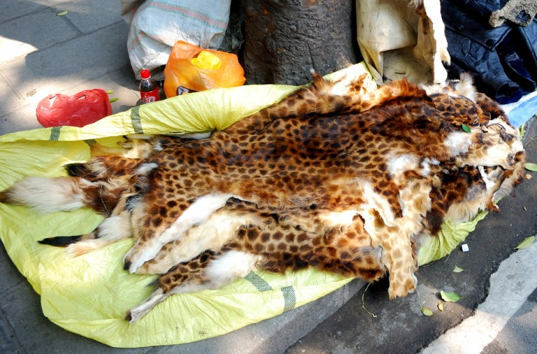illegal wildlife trade china