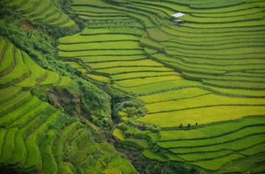 doan-tuan-fields