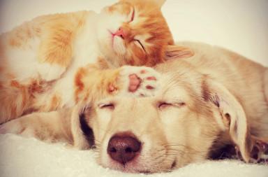 50880334 - kitten and puppy sleeping