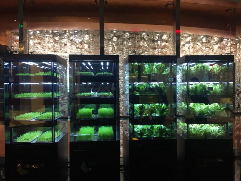IMG_2185-1 Despite growing demand for better food, China isn't quite ready for indoor farming Features Alesca Life