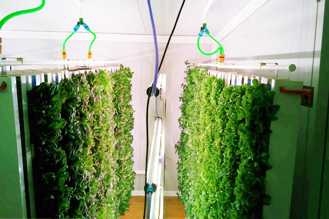 portfolio-img5-1 Despite growing demand for better food, China isn't quite ready for indoor farming Features Alesca Life